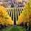 Thumbnail: Sokol Blosser, Dundee Hills Pinot Gris 2017 Oregon, USA