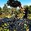 Thumbnail: Smalltown Vineyards Clovella 2018 Barossa Valley, Australia