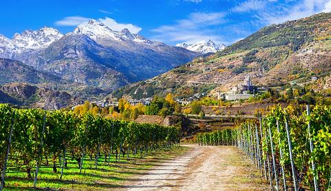 Alpine Vineyard.png