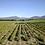 Thumbnail: Domaine Gramenon, Sierra du Sud 2019 Rhône, France