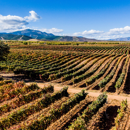 Queirón Winery in Rioja: Where tradition meets innovation