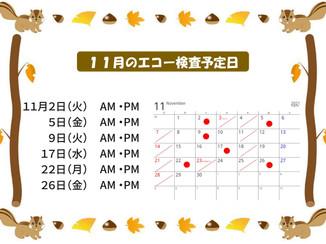 11月のエコー検査予定日をお知らせします。