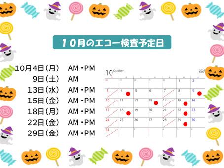 10月のエコー検査予定日をお知らせします。