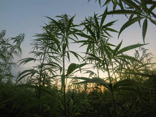 What India can learn from other countries benefiting from Hemp?