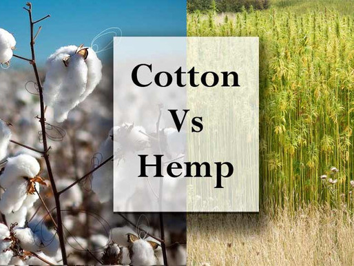 Cotton to Hemp- Why this shift is needed right away?