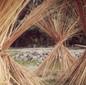 Himalayan Hemp Stalks