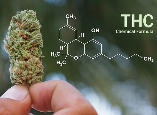 THC – a toxic or an essential cannabinoid?