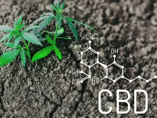 What is CBD oil? Cost, Benefits, Uses and everything you need to know.