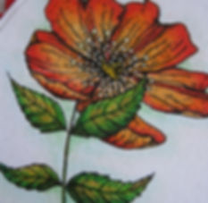 wild rose rood wm 8.jpg