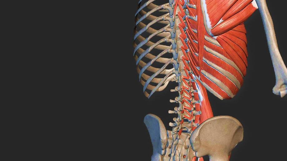 anatomia palpatoria.jpg