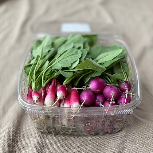 Cocktail Radish