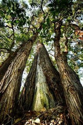 rsz_tree-4580497_640.jpg