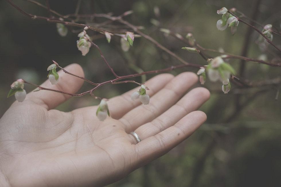 woman's hand gently holding budding leaf_edited.jpg