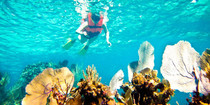 tips-for-the-best-snorkeling-in-cancun-e