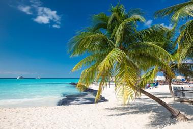 coconut-palm-on-caribbean-beach-cancun-m