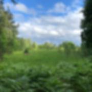 esileht-nature-444x444.jpg