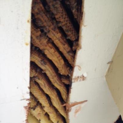 bees on roof