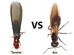 Termite and carpenter ant