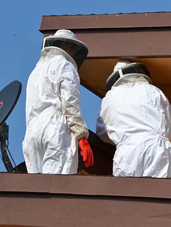 Bees_Removal