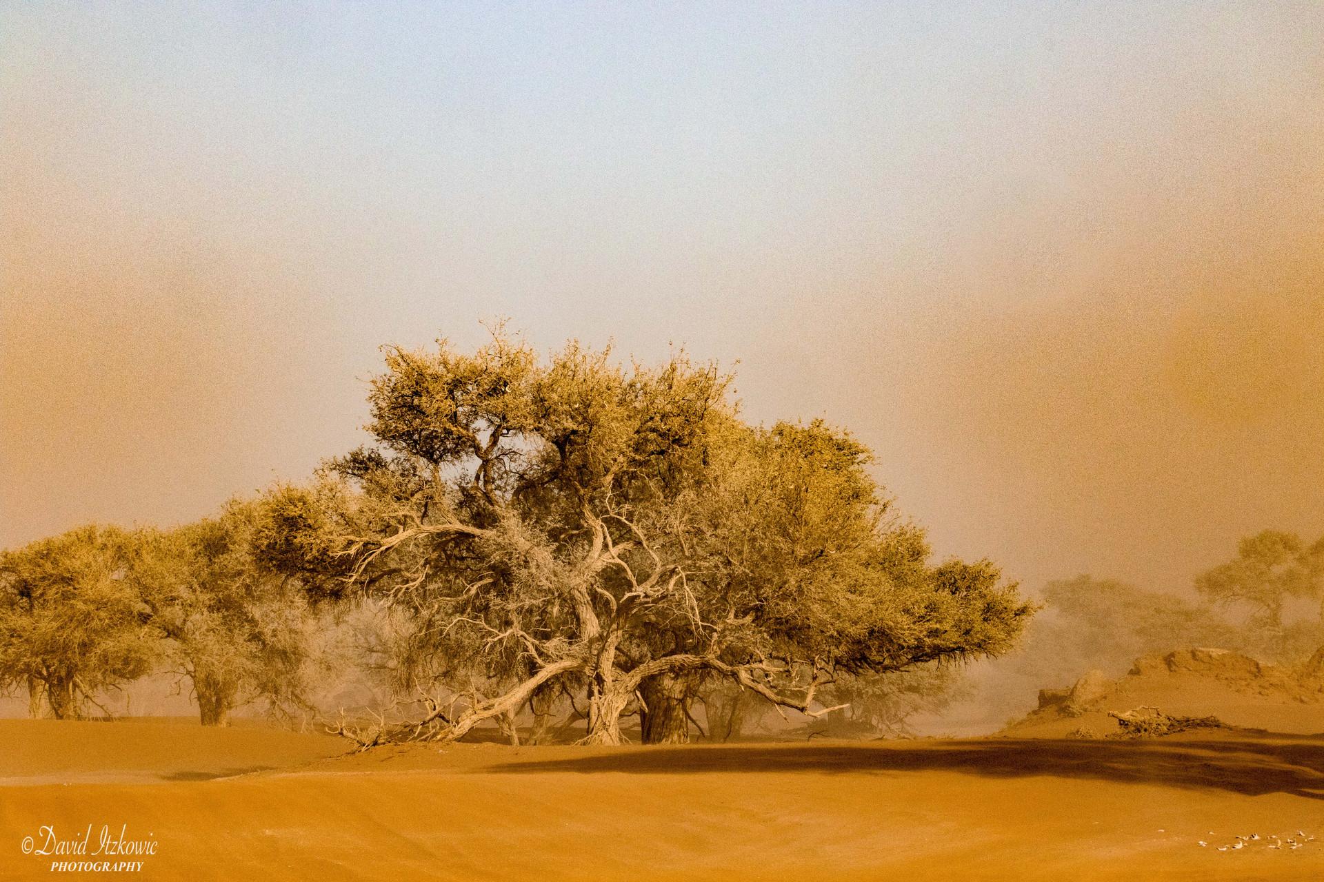 tree in sandstorm 1