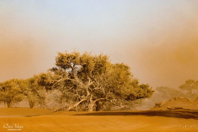 The Desert at Sossusvlei, Namibia
