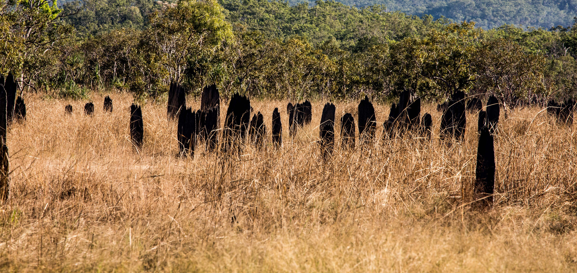 Termite Mounds, Litchfield National Park.