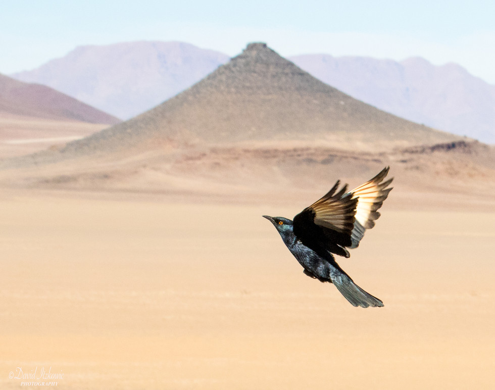 bird in the desert