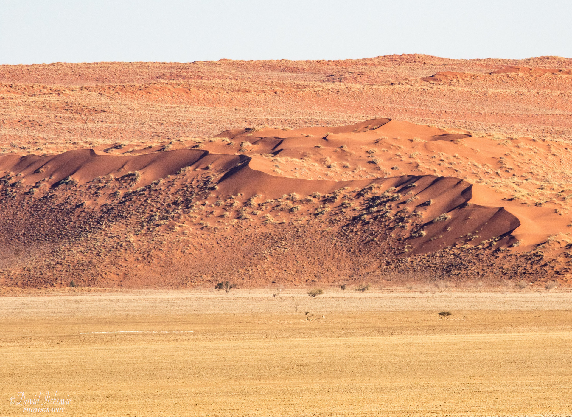 Dune and petrified dune