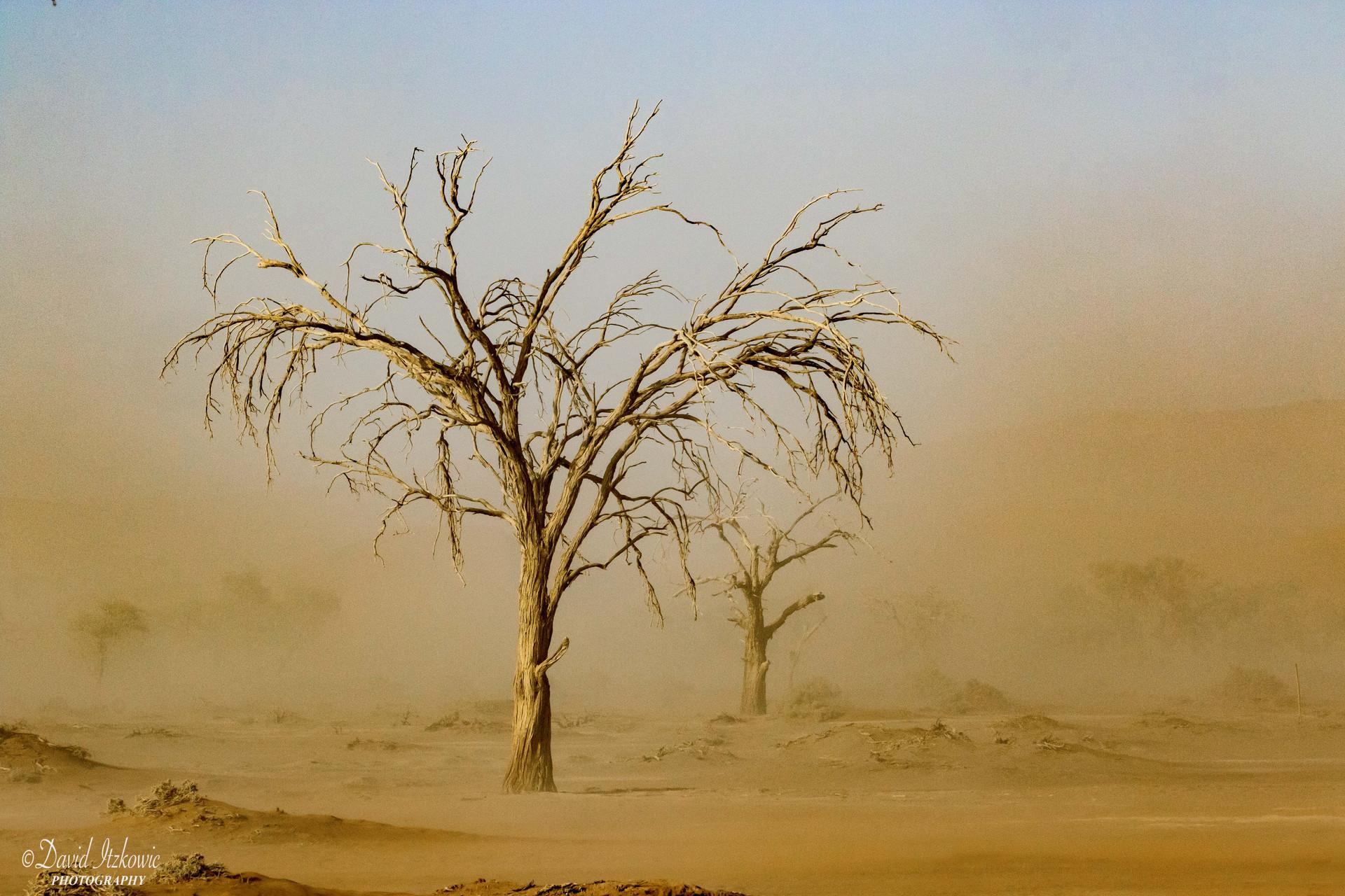 tree in sandstorm 2