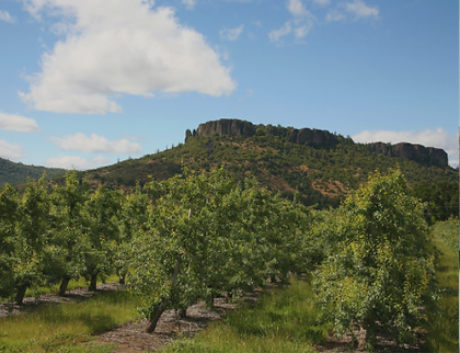 A tree orchard in the Rogue Valley
