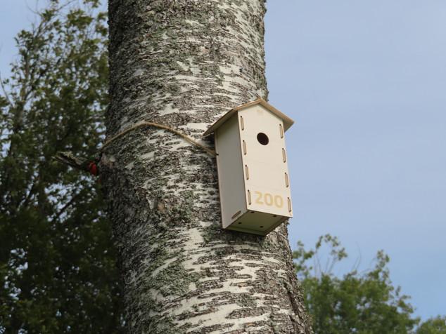 Etäisyysmerkeiksi linnunpönttöjä kotimaisesta vanerista