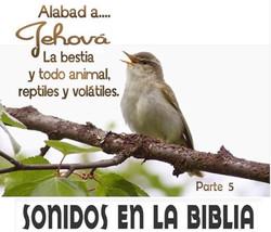 SONIDOS EN LA BIBLIA 5