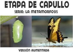 ETAPA DE CRISALIDA O CAPULLO