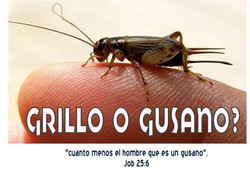 GRILLO O GUSANO
