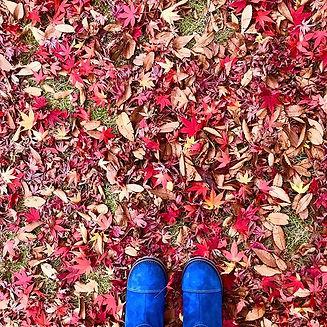 Before the snow #fall #autumn #toyama #j