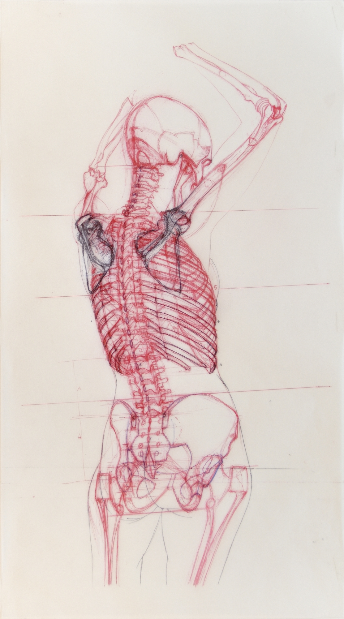 Anatomia d'Elles 1