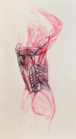 Anatomia d'Elles 3