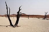 Namib pic 3.jpg