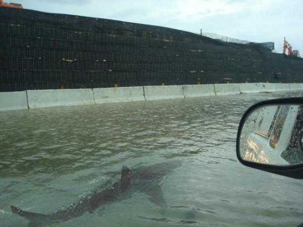 Photoshopped shark swimming on freeway via snopes.com