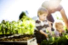plantaardige Picking