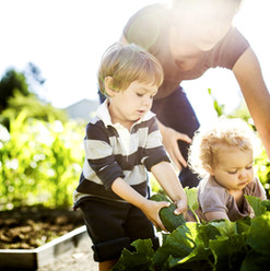 Picking vegetal