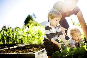 Gemüse Picking