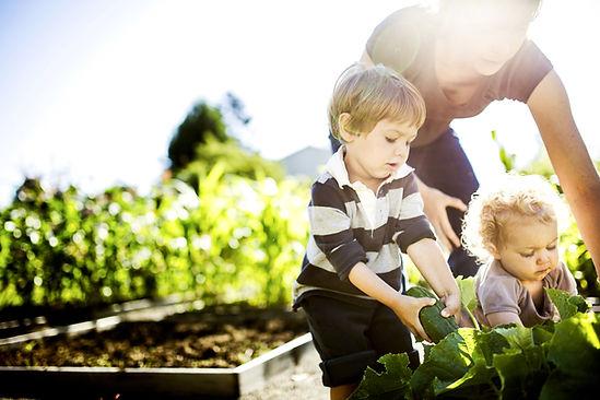 zelenina Picking
