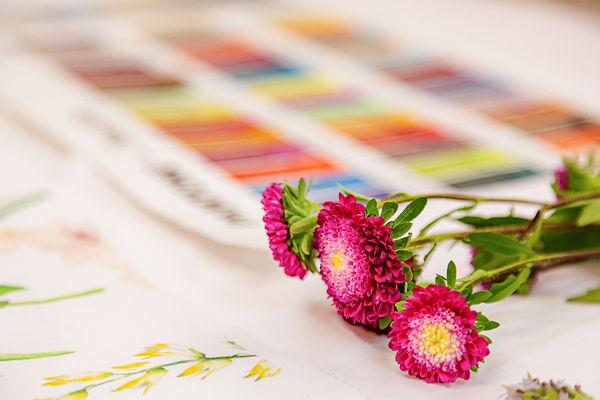 JeannFM loupe brands e co dohler flores referência de cores