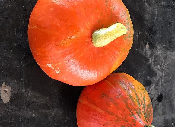 Potimarron Orange VII (Moyen) (pièce)