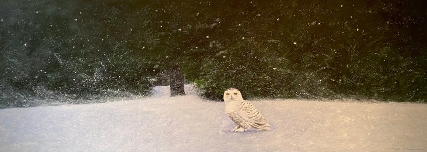 A Snowy Owl In Chadds Ford