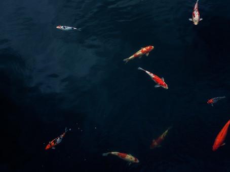 Drohendes Fischsterben im Everett-Teich Weckesheim abgewendet