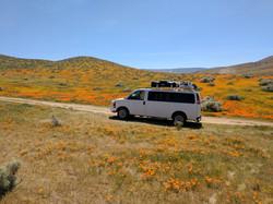 Poppy Bloom in CA
