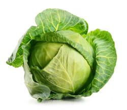 New crop cabbage