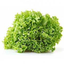 Gentile Lettuce